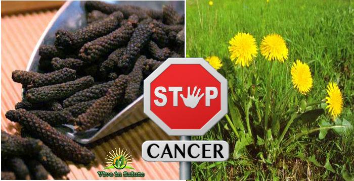 Radice di tarassaco e pepe lungo contro cancro