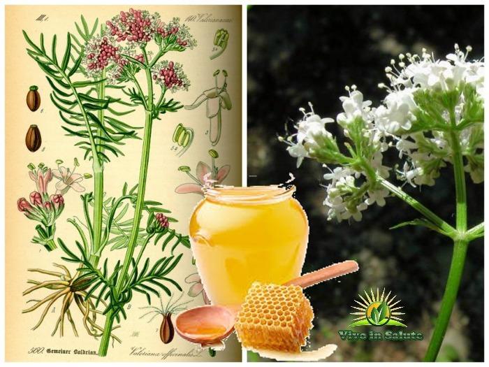 Valeriana e miele rimedio per il mal di testa