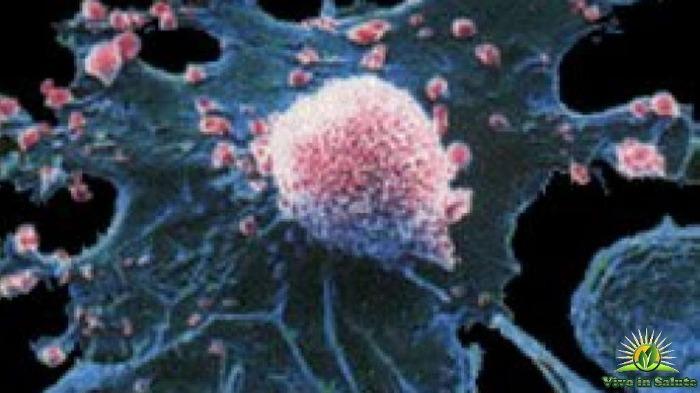 Cancro un protocollo naturale