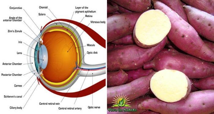 Patate dolci aiutano a prevenire la cecità