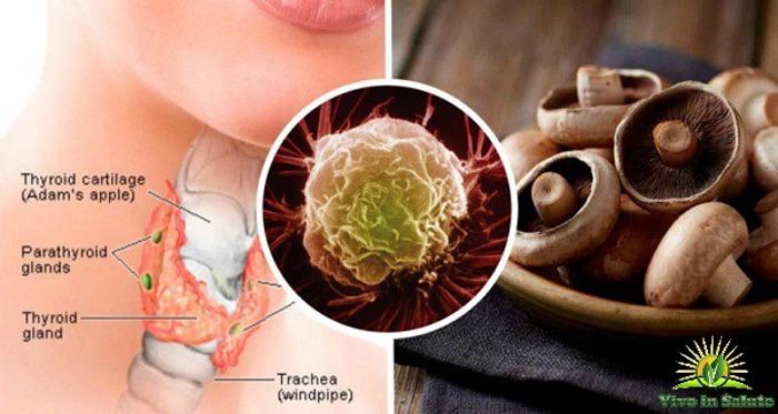 Funghi possono combattere squilibri della tiroide cancro e carenze della vitamina D