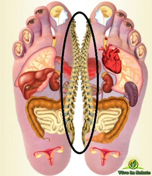 Riflessologia mal di schiena