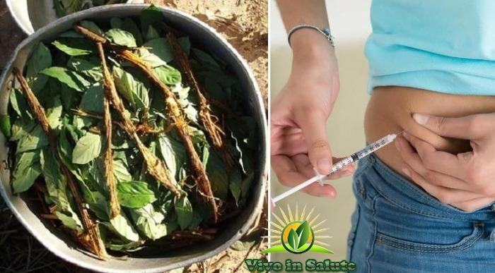 Ayahuasca-potrebbe-completamente-invertire-il-diabete