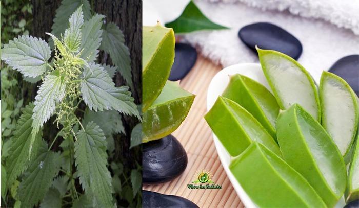 Aloe Vera con estratto di Ortica
