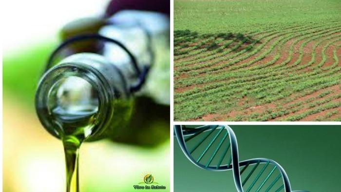 Proteggersi da danni al DNA causati da OGM