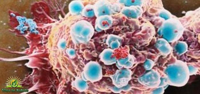 Ultima scoperta contro il cancro
