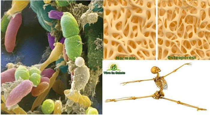 Microbiota e la salute delle ossa