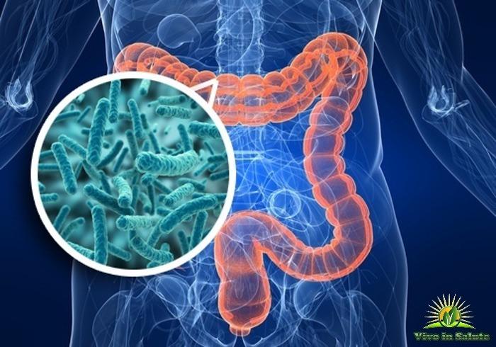 La salute parte dall'intestino