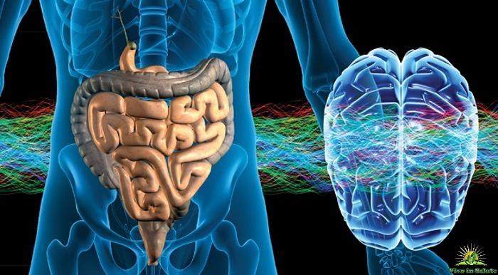 Flora intestinale e cervello