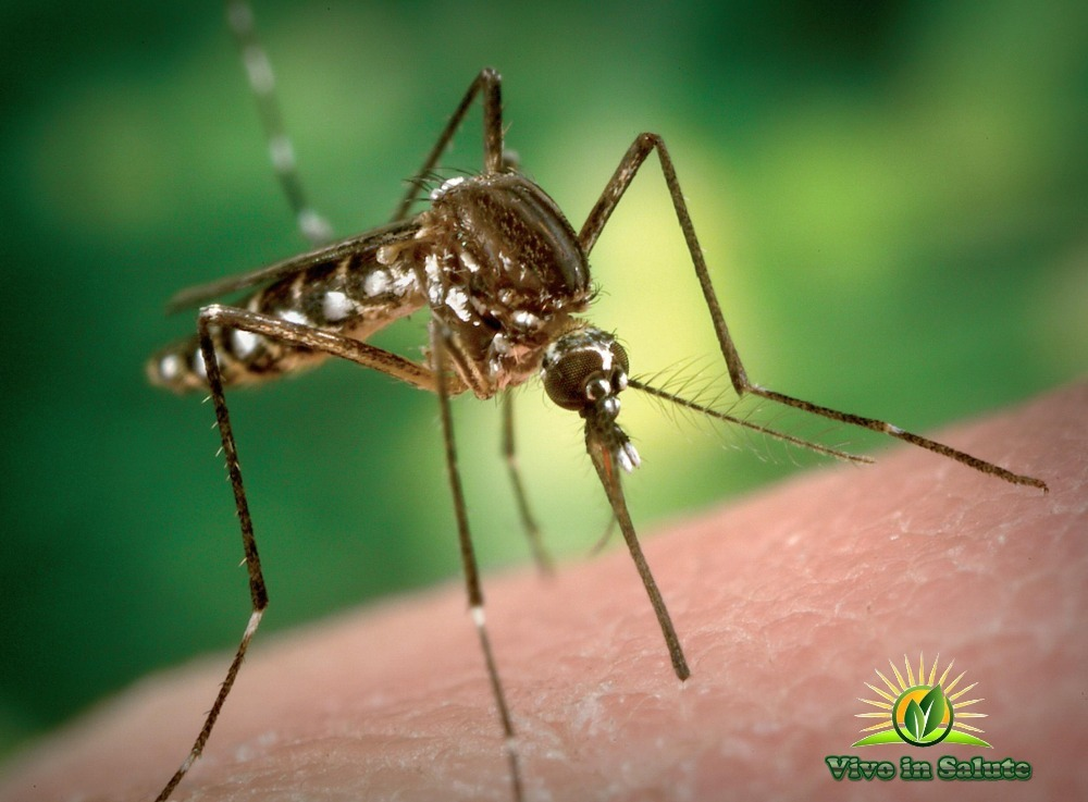 Morsi di zanzare